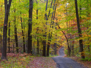 narrow road through autumn woods