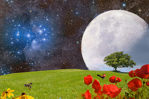 Grassy Field With Flowers, Bees, And A Tree With The Moon And Stars In The Background